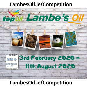Photo Competition 2020